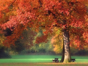 autumn-fall-nature-tree-outdoors