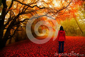 fairytale-forest-red-path-28894020