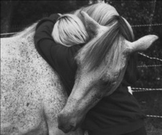 Horse Embrace