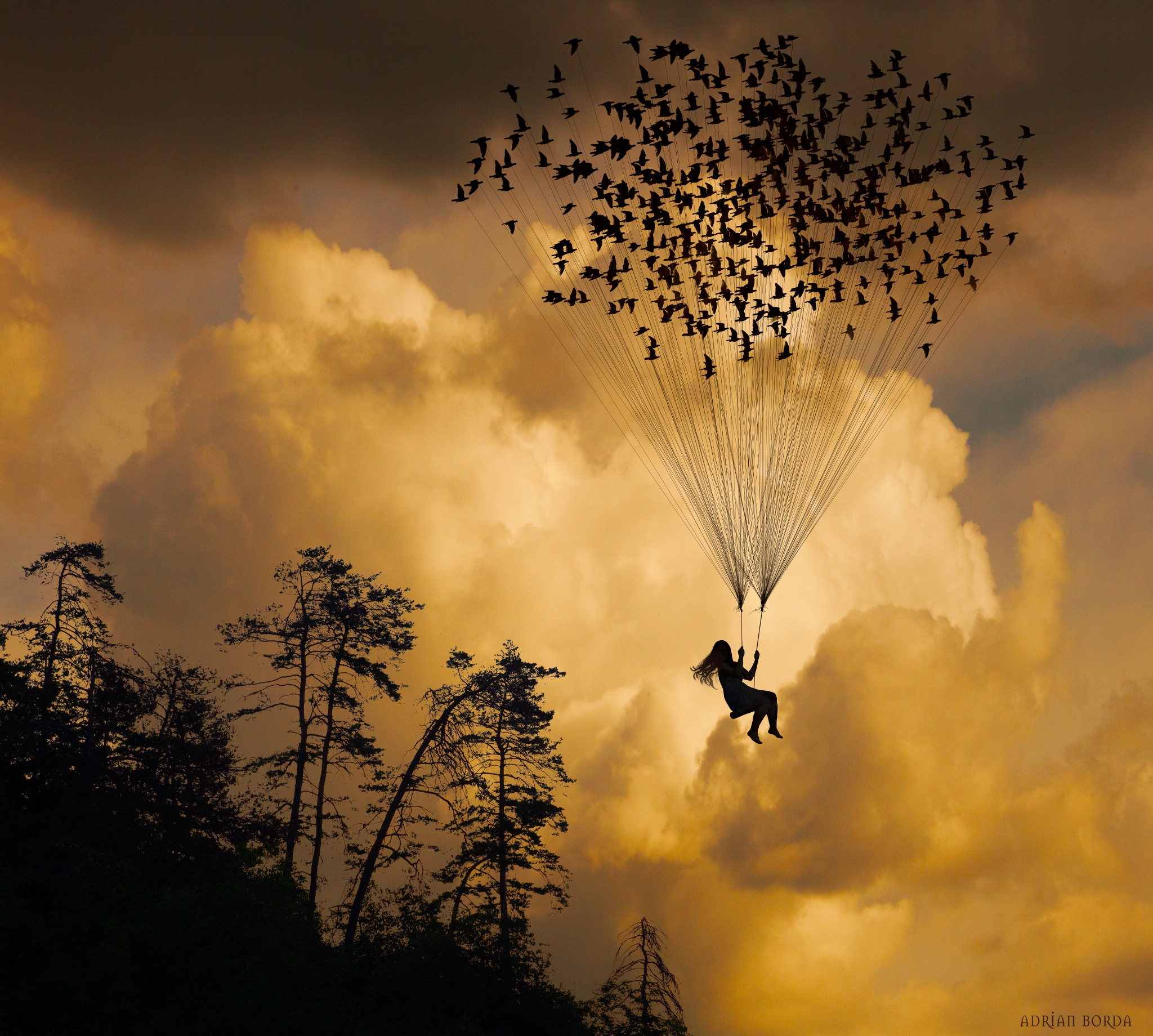 Flying with Birds
