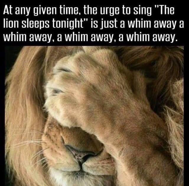Humour Lion.jpg